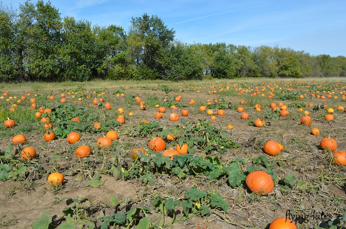 pumpkinpatch4