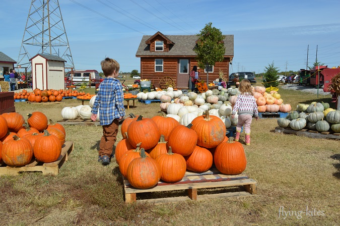 pumpkinpatch6